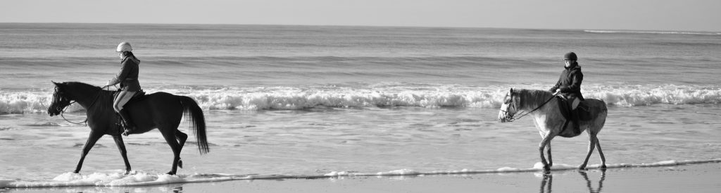 Chevaux sur a plage de Longeville sur Mer