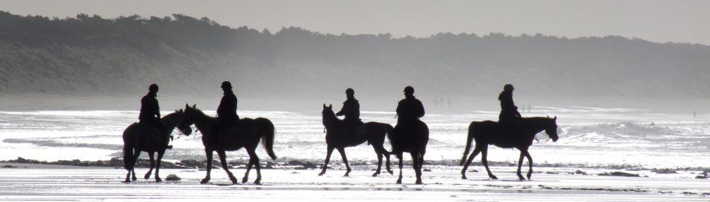 Chevaux à contre-jour sur la plage de Longeville sur Mer