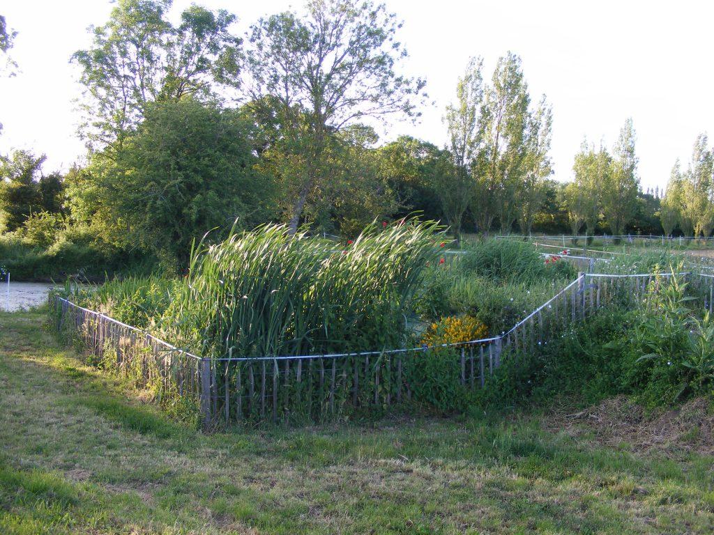 Station de phytoépuration des eaux usées à Bourg Paillé